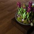 Массивная доска Массивная доска Дуб Бразильский орех (Walnut) от Coswick